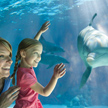 Sea World and Busch Gardens Free
