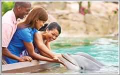 SeaWorld Orlando Attractions